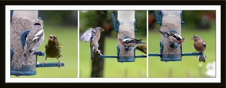 bird feeder arguments