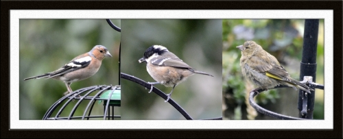 chaffinch, coal tit and greenfinch