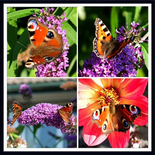 colourful butterflies