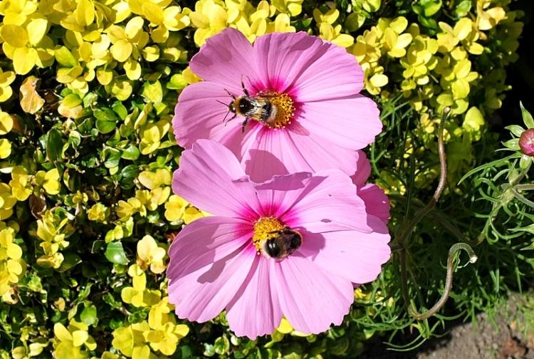 matching bees