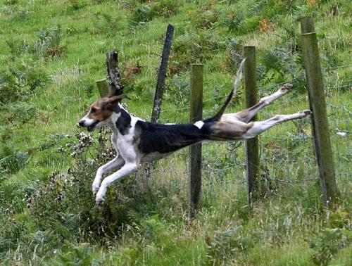 hound trail 2013