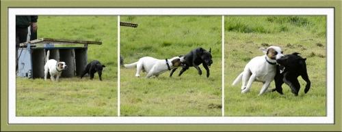 terrier racing Benty 2013
