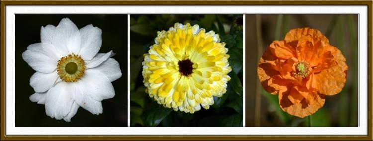 Anemone, marigold and poppy