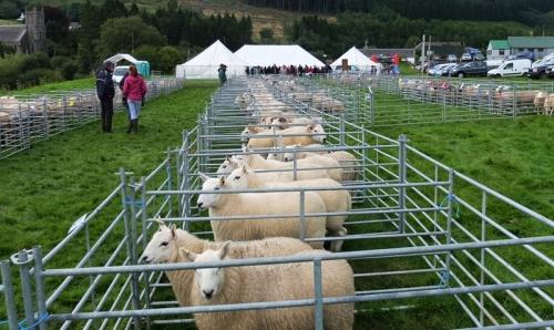 sheep pens Benty Show 2013