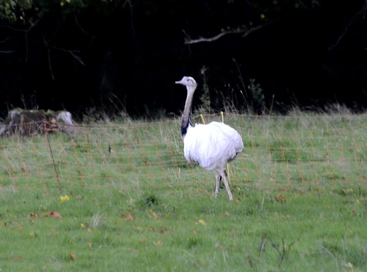 Georgefield bird