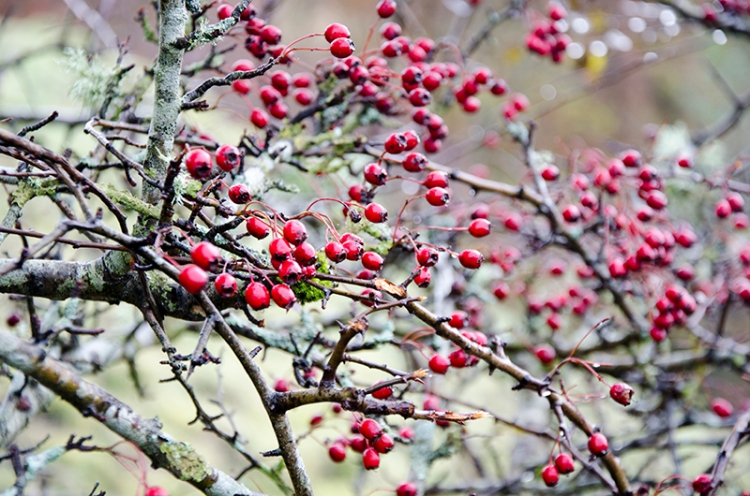 berries (6)