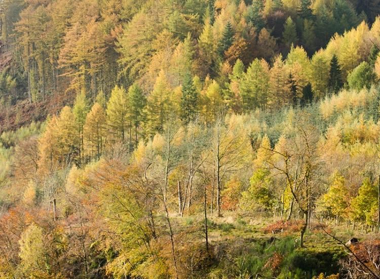 broomholm view
