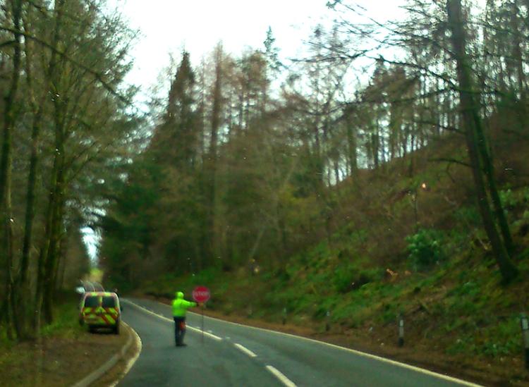tree felling  by A7