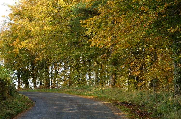 hollows road (2)