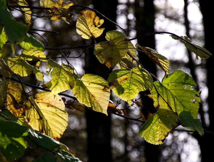 leaves hollows road (2)