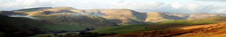 panorama ewes