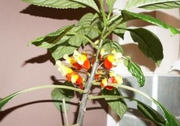 parrot plant