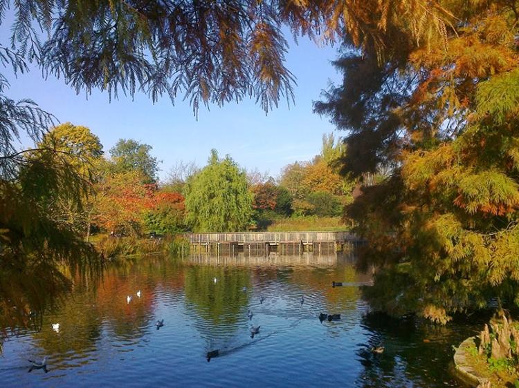 Queen Mary's Garden, Regent's Park