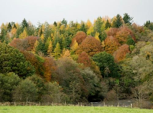trees at hollows