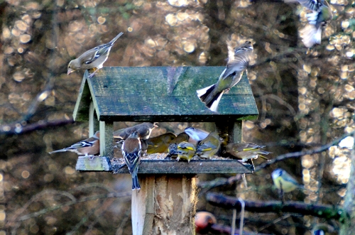 busy moorland feeder