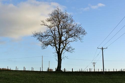 tree at Hollows