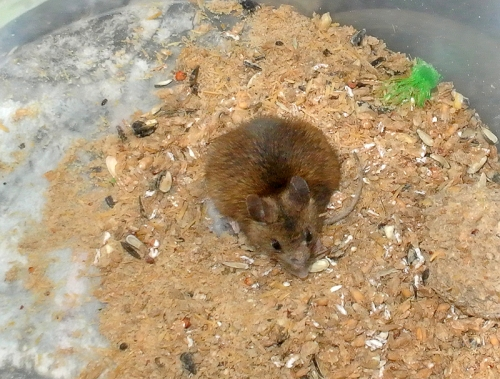mouse in bucket