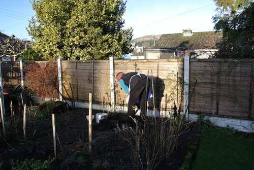 burying the turkey
