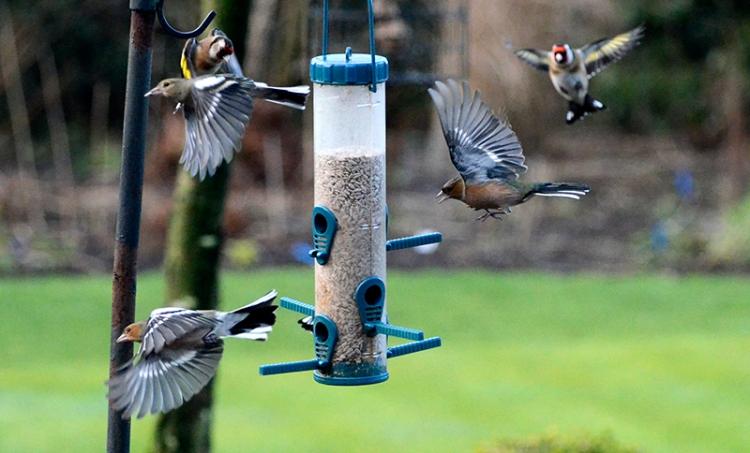 flying birds at the feeder