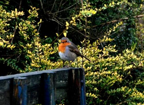 robin on bench