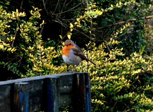 robin on bench