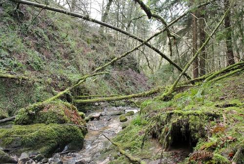 fallen trees byreburn