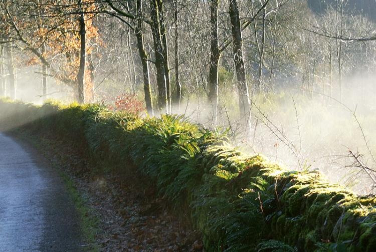 Moss steam