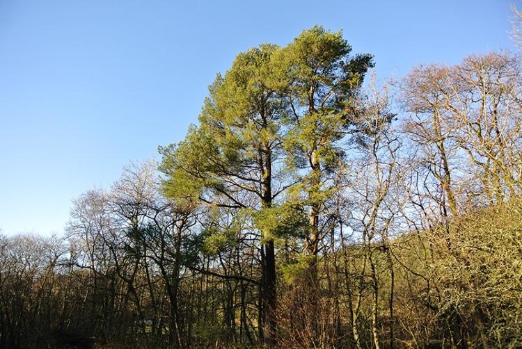 Tree beside tarras