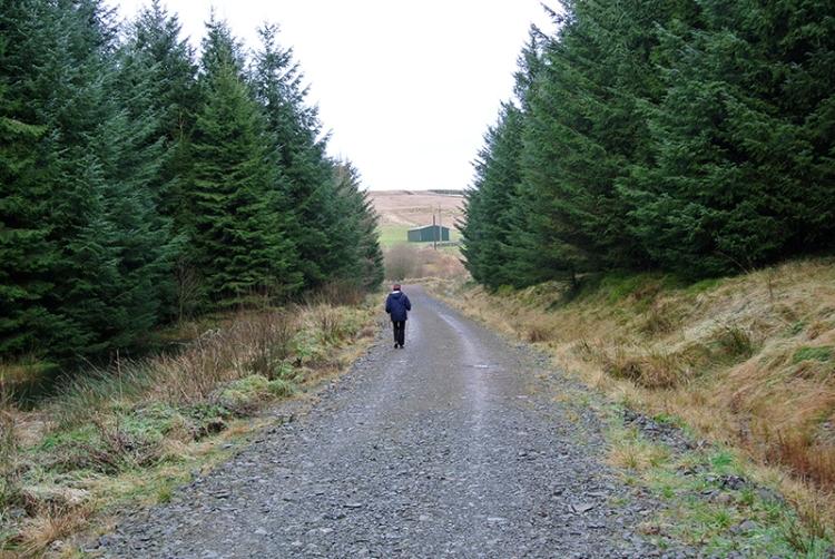 Kirtleton forest