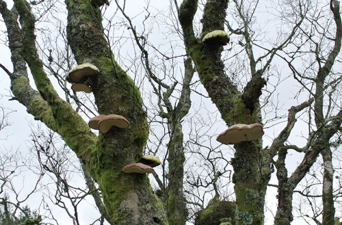 tree with fungus
