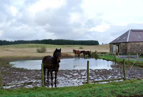 horse and puddle