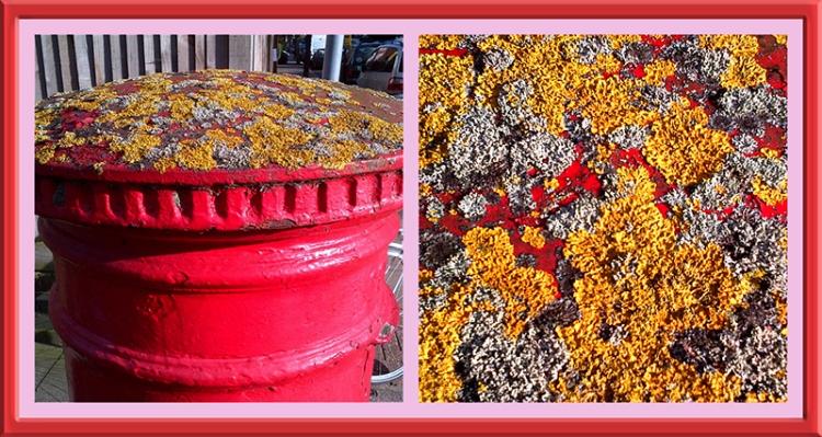 lichen post box