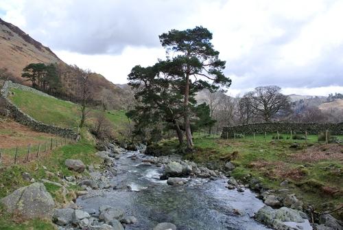 Scots pine at Glenriddin