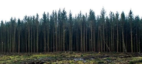 Kerr wood