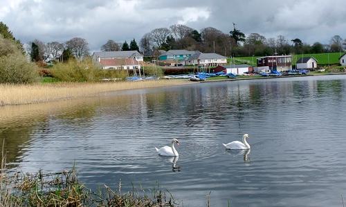 swans on Castle Loch