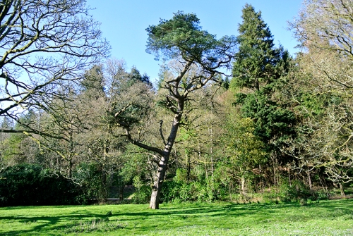 tree on castleholm