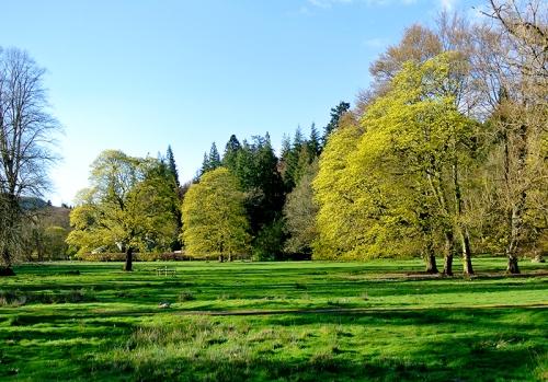 Castleholm trees