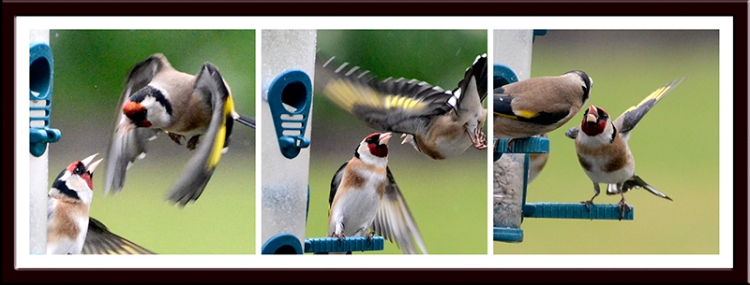goldfinch action