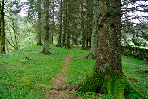 Woodland path by wauchope