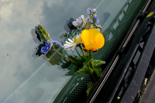 wild flowers on car