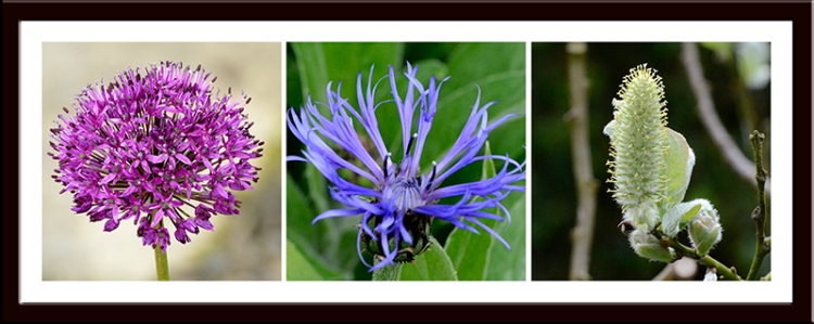 Allium, cornflower and willow