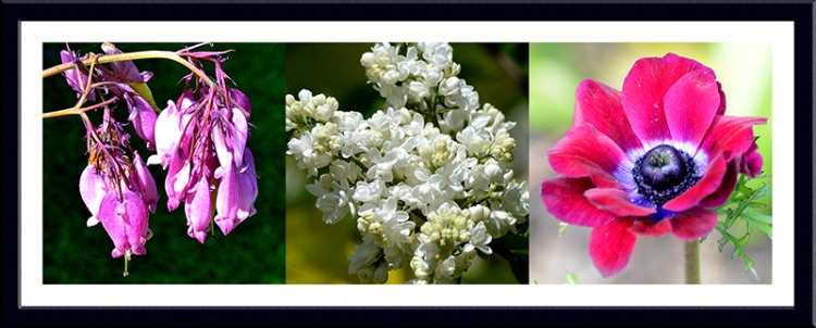 Dicentra, lilac and anemone