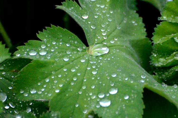 leaf with rain