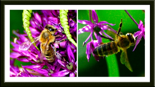 allium and insect