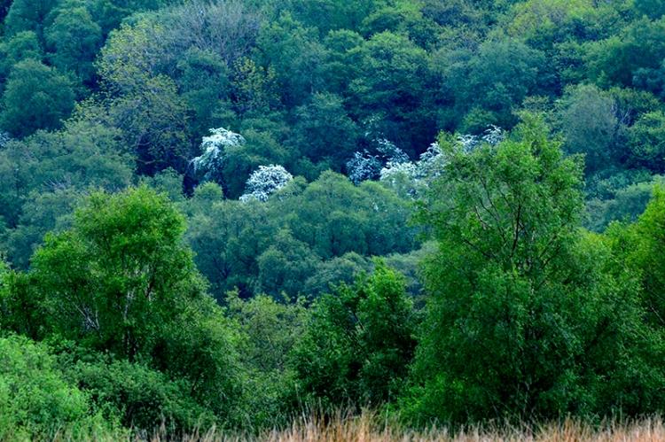 Tarras woodland