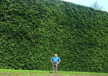 gavin and hedge