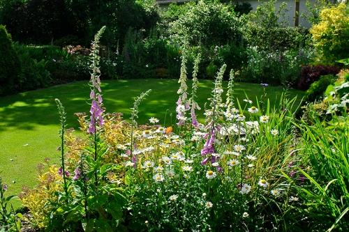 evening garden