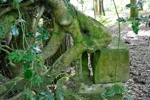 kneeling tree