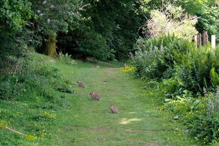 Stubholm rabbits