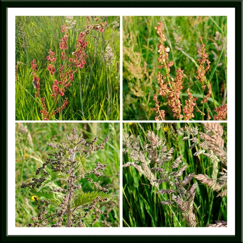roadside grasses